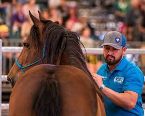 TOWTH Competitor patting his horse