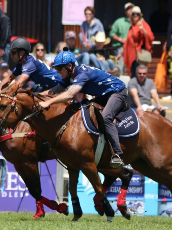 better sporting horse