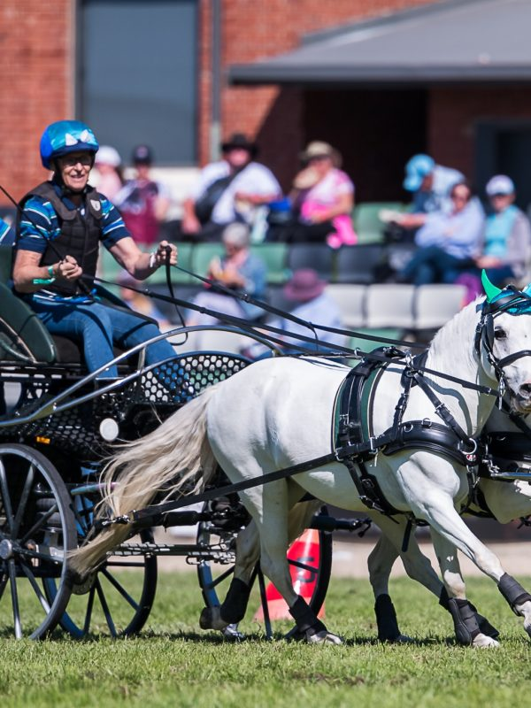 competition_carriage_driving